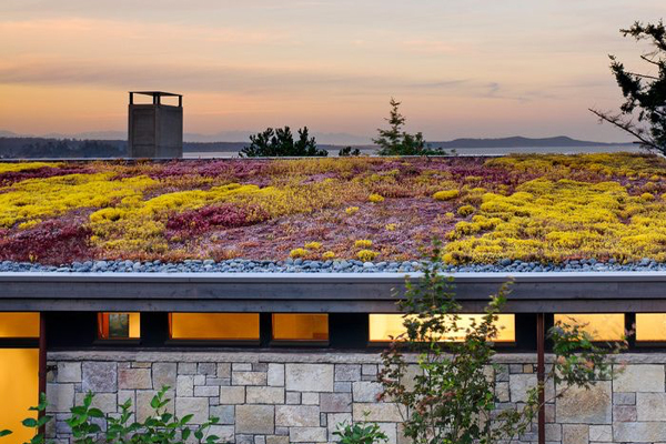 Green Sedum Roofs